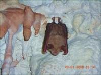 Пещера МАН 20.01.08