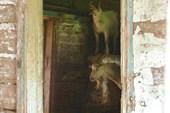 Козий дом...