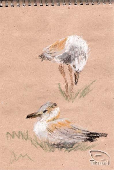 БА.-Молодая-чайка