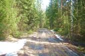 Снега в лесу еще много