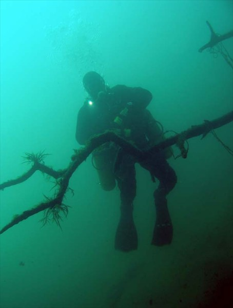 Подводные корни.