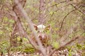 Показалось, что из леса свиное рыло глядит на меня.
