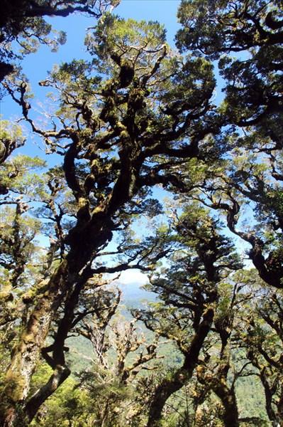Деревья по мере приближения к перевалу все чуднее
