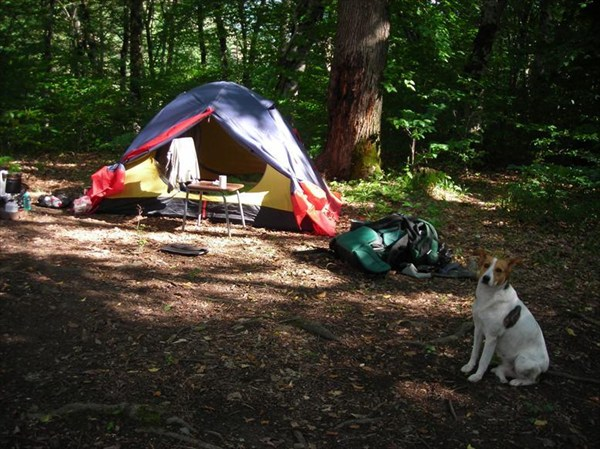 """на фото: Наша палатка на окраине лагеря """"Белая речка"""""""