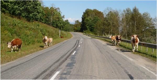 Колорит федеральных дорог