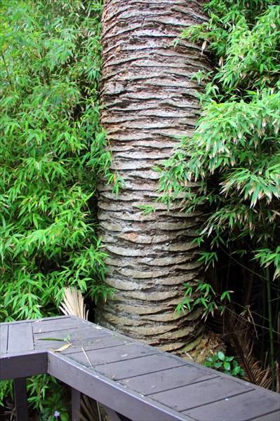 И из нашего окна пальма в зелени видна...