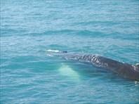 Наблюдение за китами в районе Хусавика