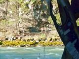 Маралы на противоположном берегу Чуи