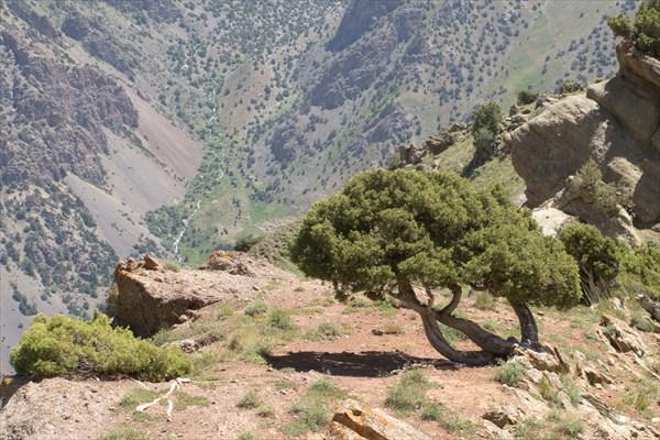 Дерево и горы