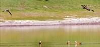 Шара-Нур. Красные утки.