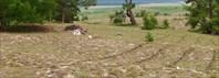 Круг на песке. п. Халгай