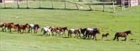 Узуры. Лошади идут на водопой.