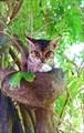 Пицундский кот в тени