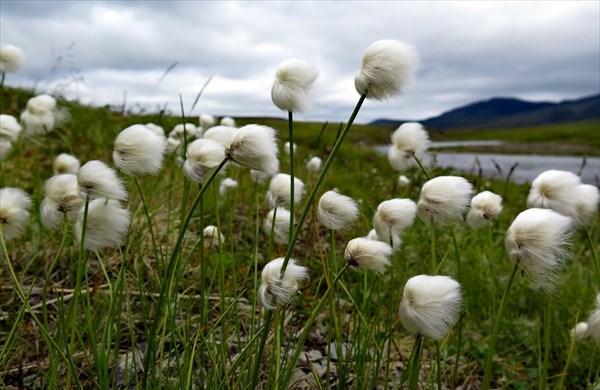 Цветы Очеты