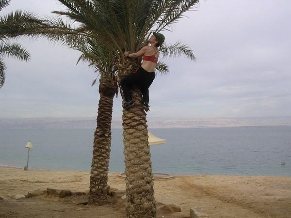 большая белая обезьяна на пальме