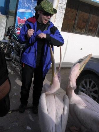 Пеликаны. Тартус (Сирия)