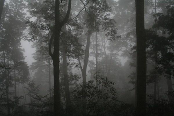 в тумане подоблачнаго слоя