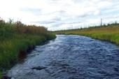 И в речке вода есть