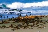 Командорский архипелаг