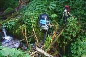 Бамбуковый мостик - маленький, но скользкий