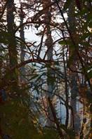 Здесь на высоте джунгли больше похожи на наш лес