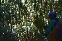 Джунгли в сикхском святом месте
