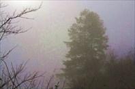 Утренний туман на выезде из Мечуки