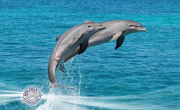 050-Дельфины