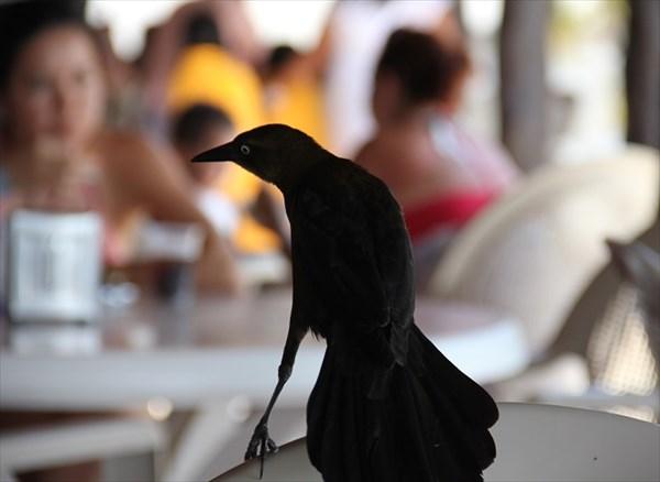 061-Птичка