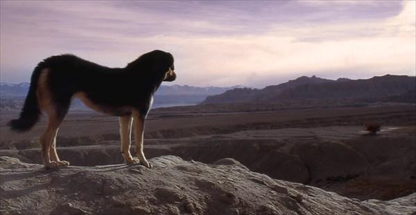 одинокий мастиф на скале