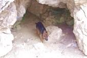 Пещерный собак