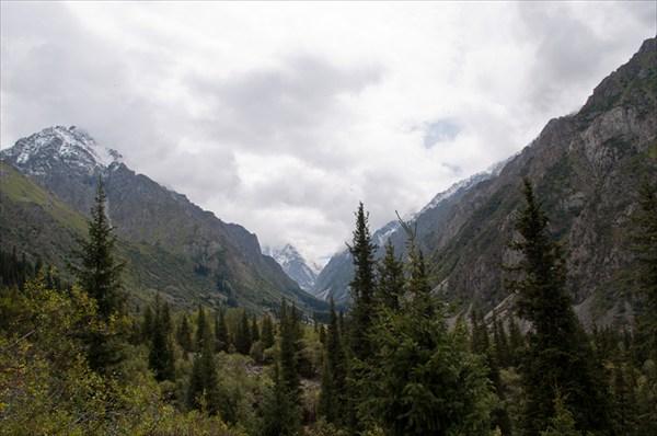 Зона леса