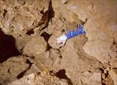 Исследуем шкурники в Геологов-3