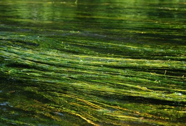 По воде аки по суху 07-21