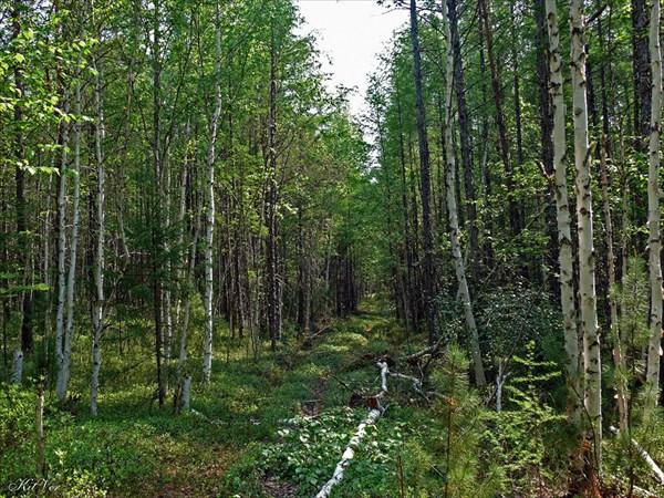 Начало тропы вглубь тайги вдоль притока Енюк