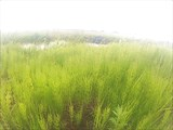 Зеленая тундра