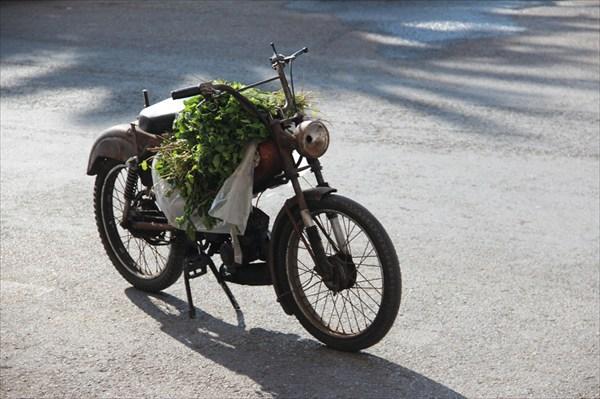 Это охапка марокканской мяты - продают прямо с мотоцикла