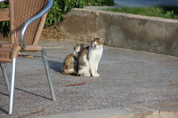 Набережные коты даже мурлычат по-мароккански