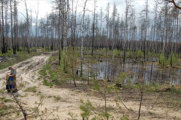 Вырубки после пожаров 2010 года