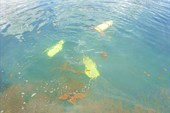 В соседнем озере тоже бьют источники, но лезть некуда