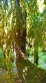 Лес на пути к Гегскому водопаду