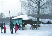 Олени в п. Бажуково