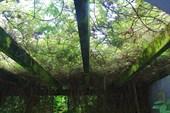 Сад создавает впечатление естественности