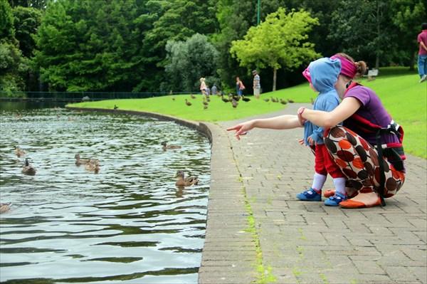 Сады Гамильтона начинаются прекрасным прудом с утками
