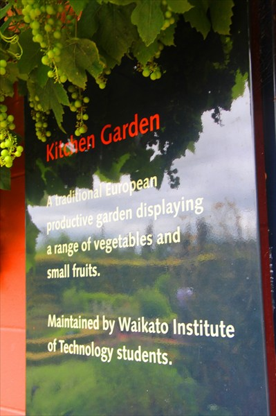 """В """"кухонном саду"""" растет то, что идет в пищу"""