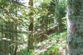 Подъем среди леса