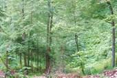 Первая котловина в лесу