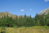 Поляна - место для лагеря. Автор фото-Надежда-географ