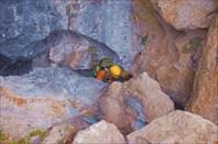 Пещерко