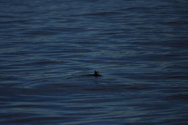 Тупик в Тихом океане